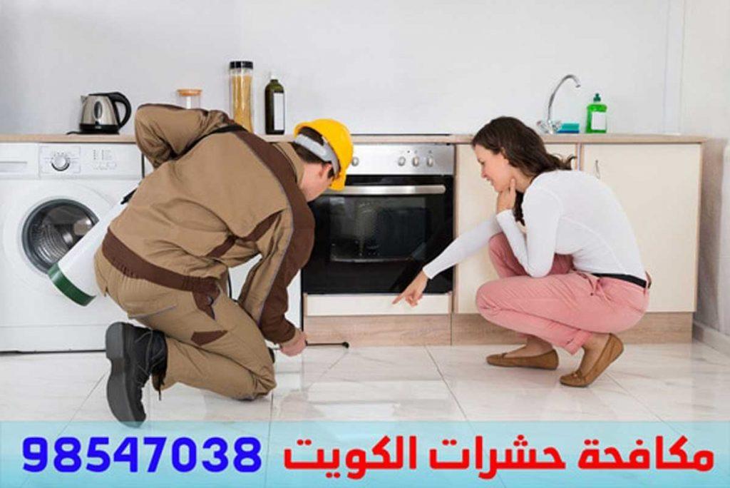 حشرات الكويت